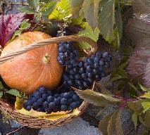 Dynia w ostrym przecierze z winogron