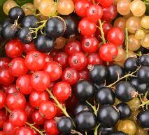 Porzeczki - właściwości i składniki odżywcze